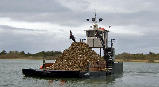 Oyster dredge Elusive fully loaded